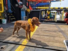 Dog on offshore platform