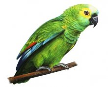 Silent Parrot — Importance of Listening
